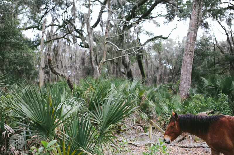 cumberland island travel photography, rotarski photography (63)